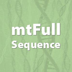 картинка Комплексный генетический тест сотчетом от магазина Доступная генеалогия