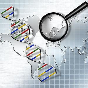 картинка Интерпретация имеющихся результатов ДНК-тестов от магазина Доступная генеалогия
