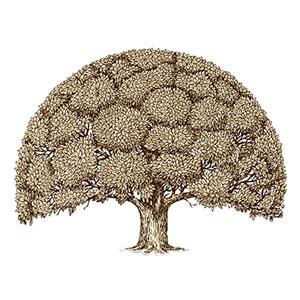 картинка Создание генеалогического древа наоснове опроса родственников от магазина Доступная генеалогия